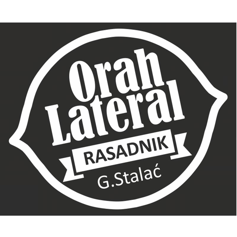 Orasi Lateral